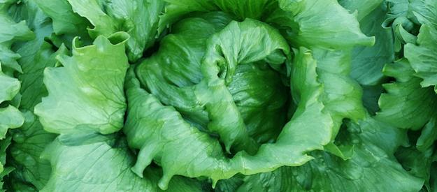Ice 40102 Salat