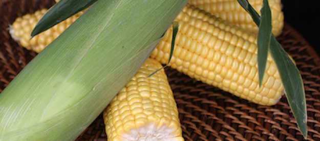 Оватонна HM CLAUSE кукуруза Вильморин-Микадо  Россия