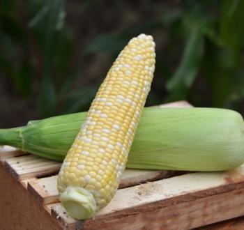 Cumberland Sweet Corn